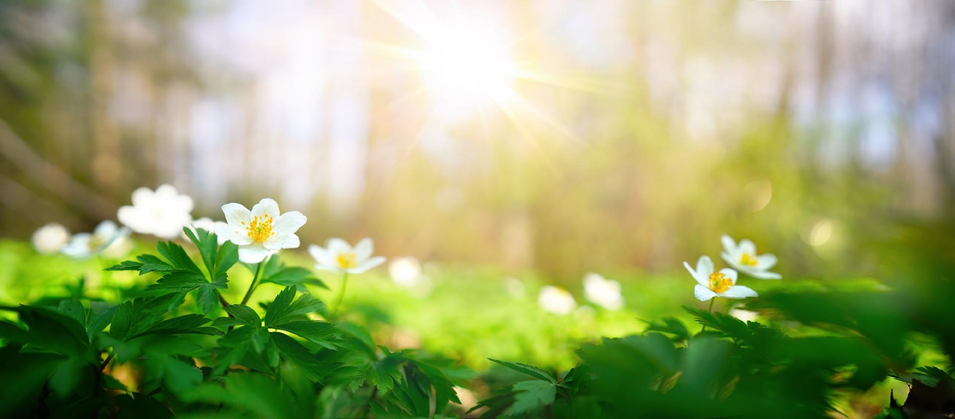 Keväthulinat Banner